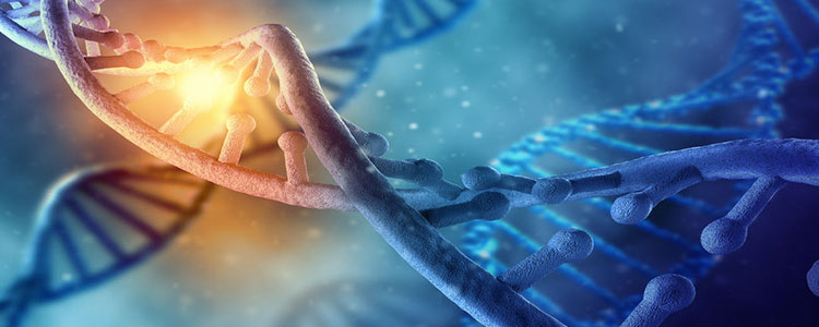 Silent Witness DNA